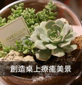 創造桌上療癒美景!自製生態缸